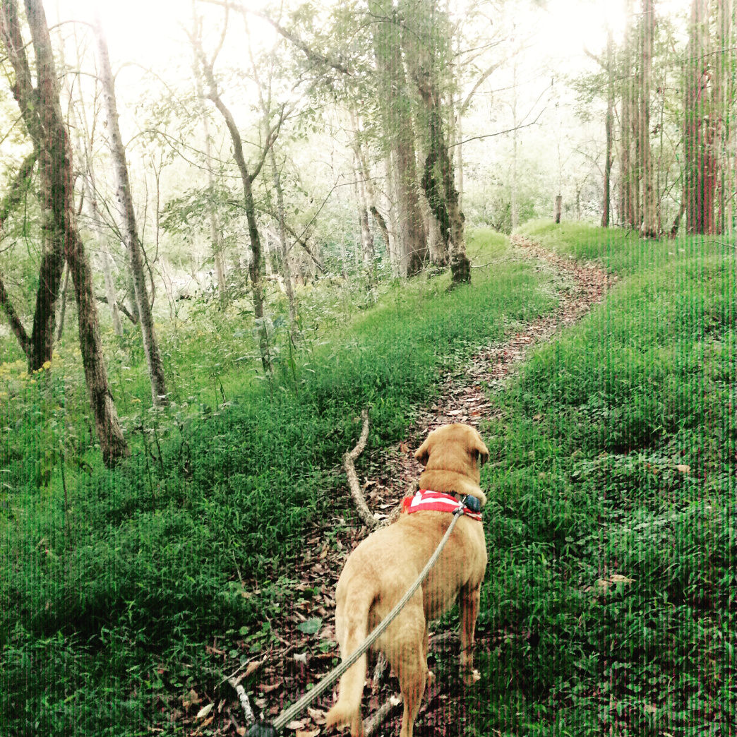 Don't forget to bring your four-legged hiking buddy!     Malee Oot