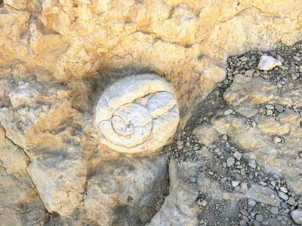 A fossil in the Negev Desert is a reminder that people are just fleeting visitors in the context of geological time.