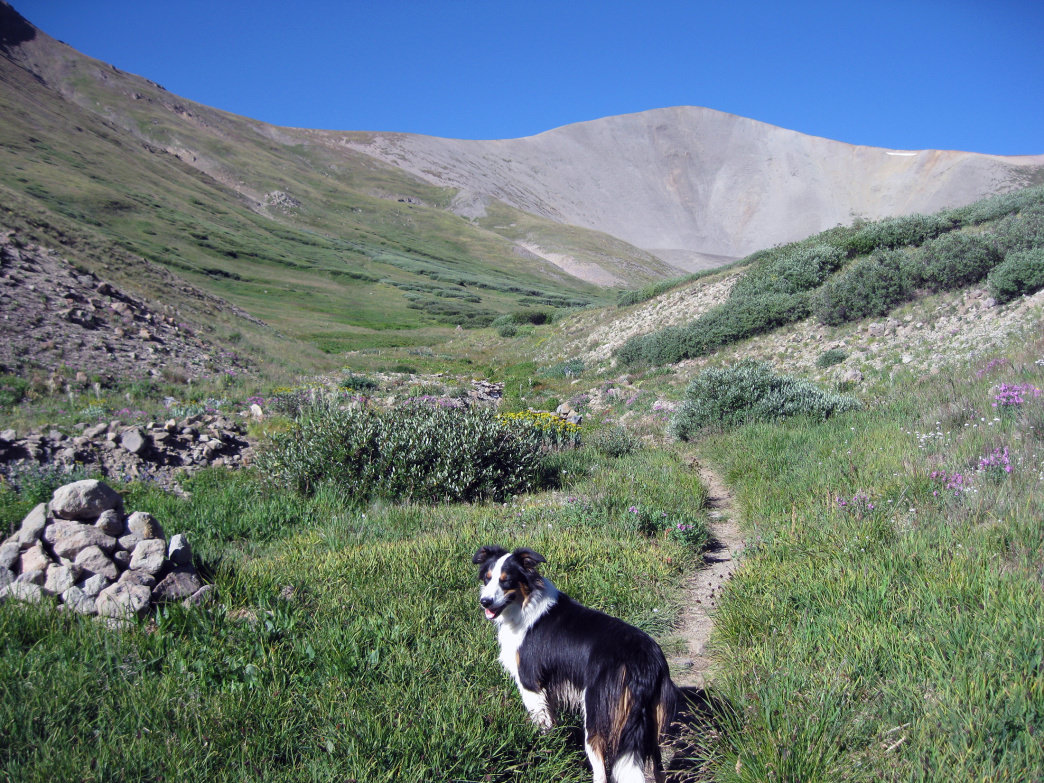 San Luis is one of the best walk-up 14ers, especially in early summer when many small streams run and wildflowers are in full bloom.      James Dziezynski