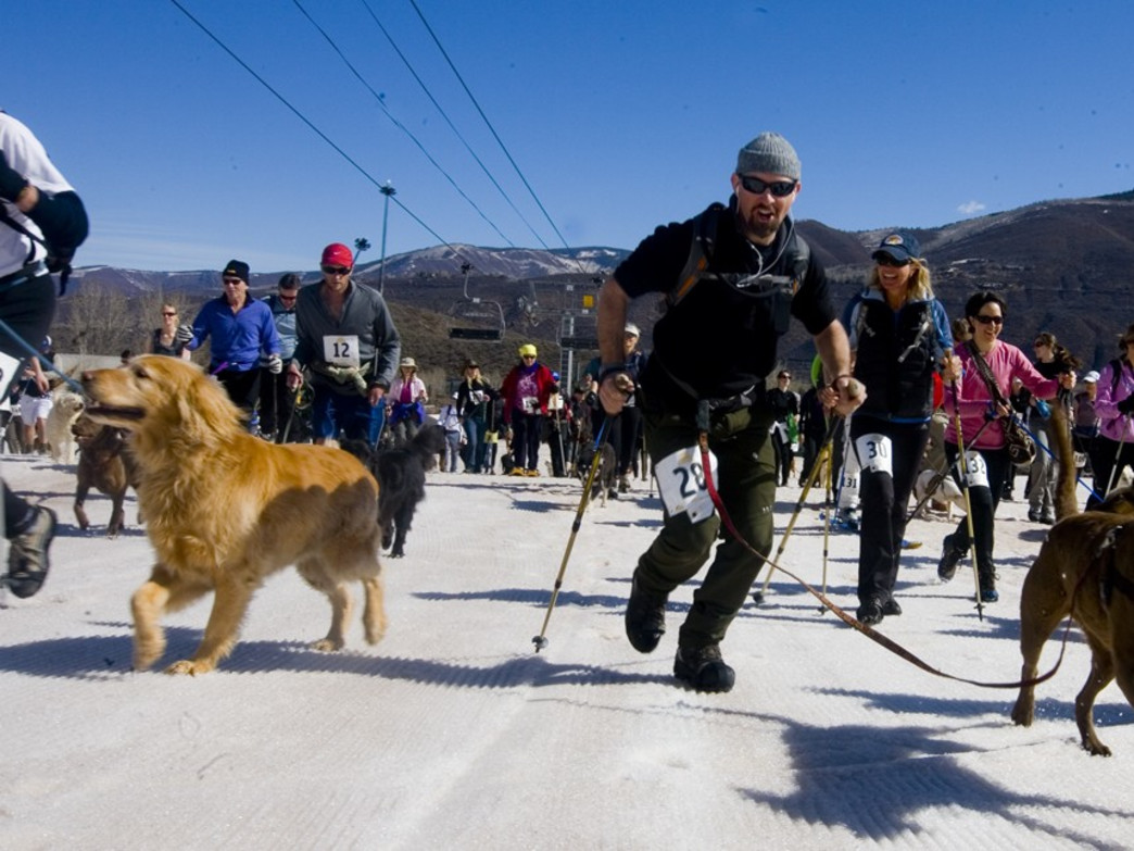 Runners and canines charge to the top of Aspen's Buttermilk Mountain in Sun Dog's K9 Uphill