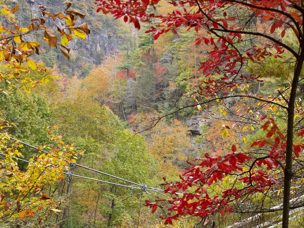 Tallulah Gorge State Park features both scenic hikes and thrilling whitewater.