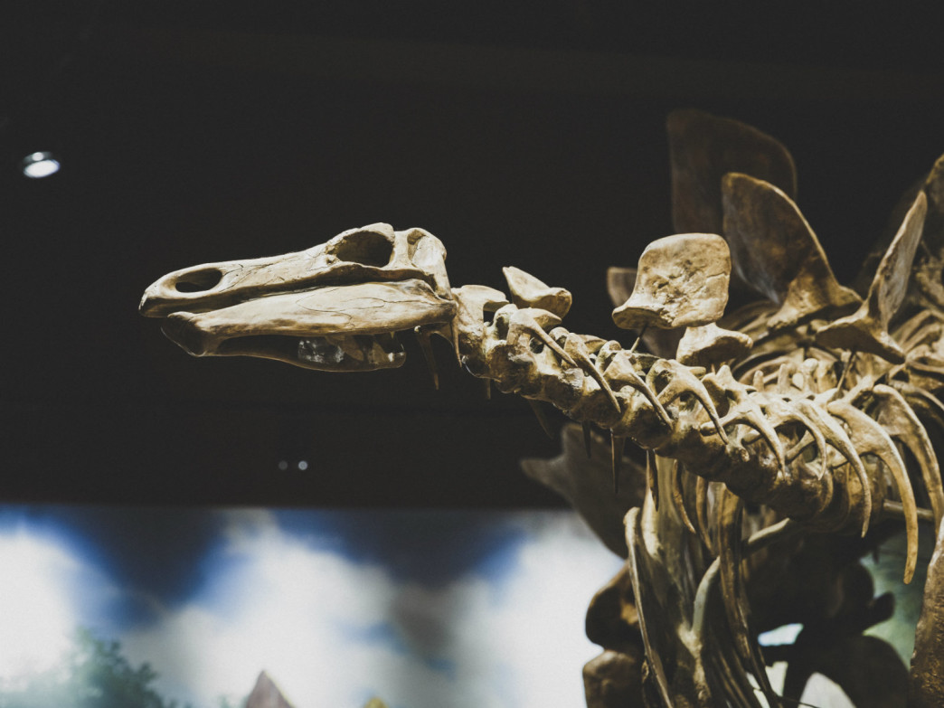 The Field House is appealing to dinosaur lovers and history buffs.