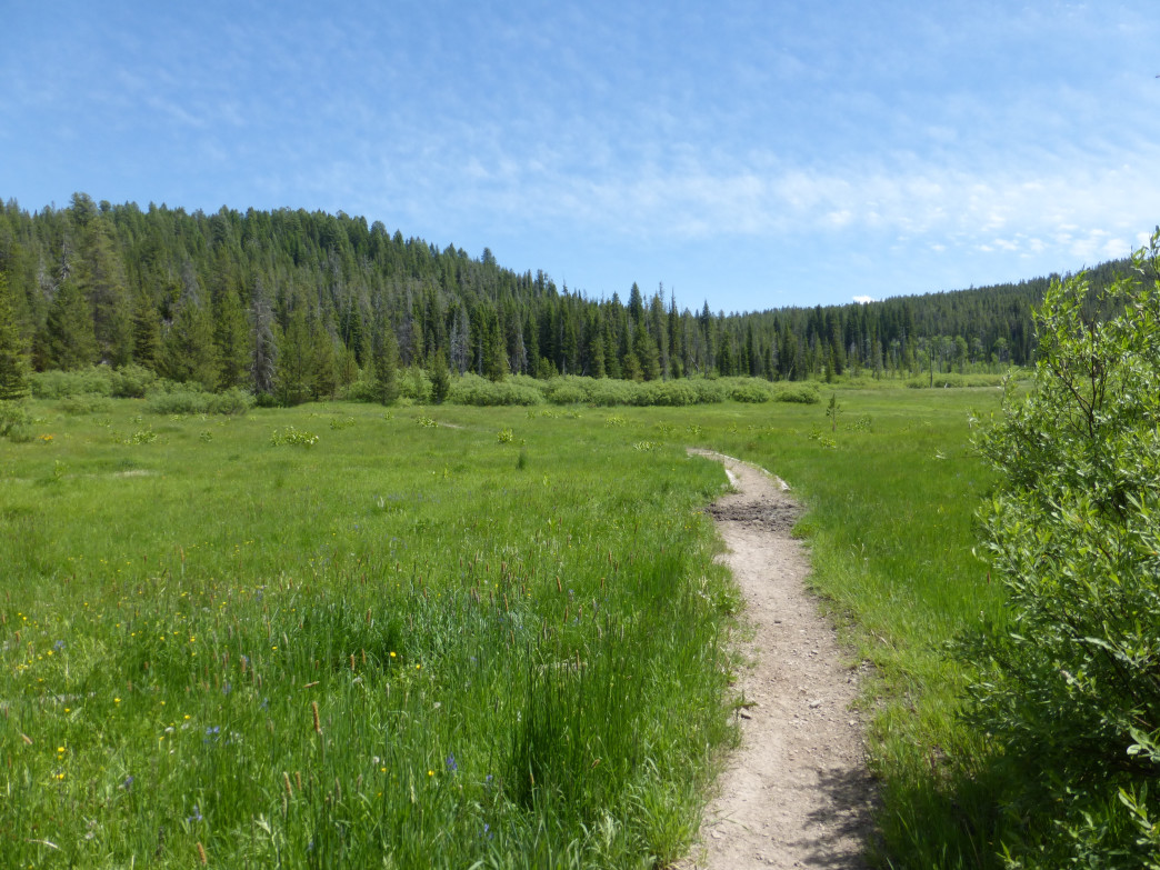 Enjoy scenic meadows and keep your eyes out for wildlife as you hike in the Caribou-Targhee National Forest.