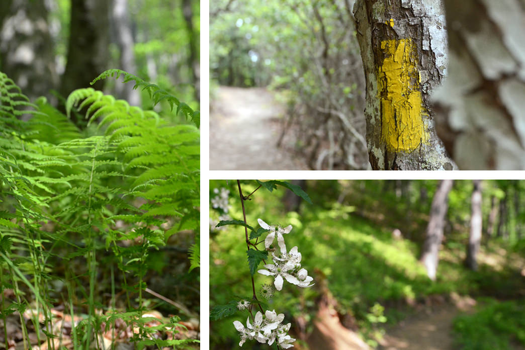 Following the yellow blazes, and getting lost in the lushness of the trail.