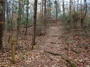 Image for The University of Alabama Arboretum - Trail Running