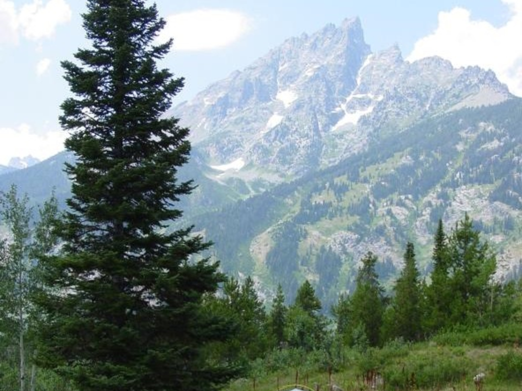 The Jenny Lake campground is the most popular spot to pitch a tent in Grand Teton National Park.