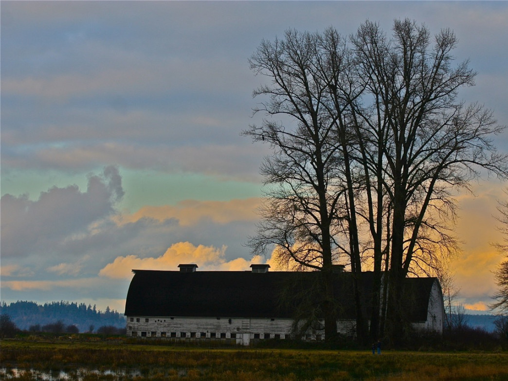 The barns at Nisqually Wildlife Refuge