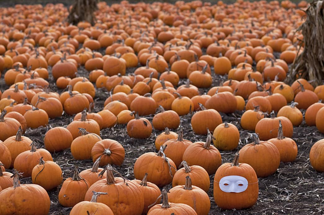 Good gourd, that's a lot of pumpkins.