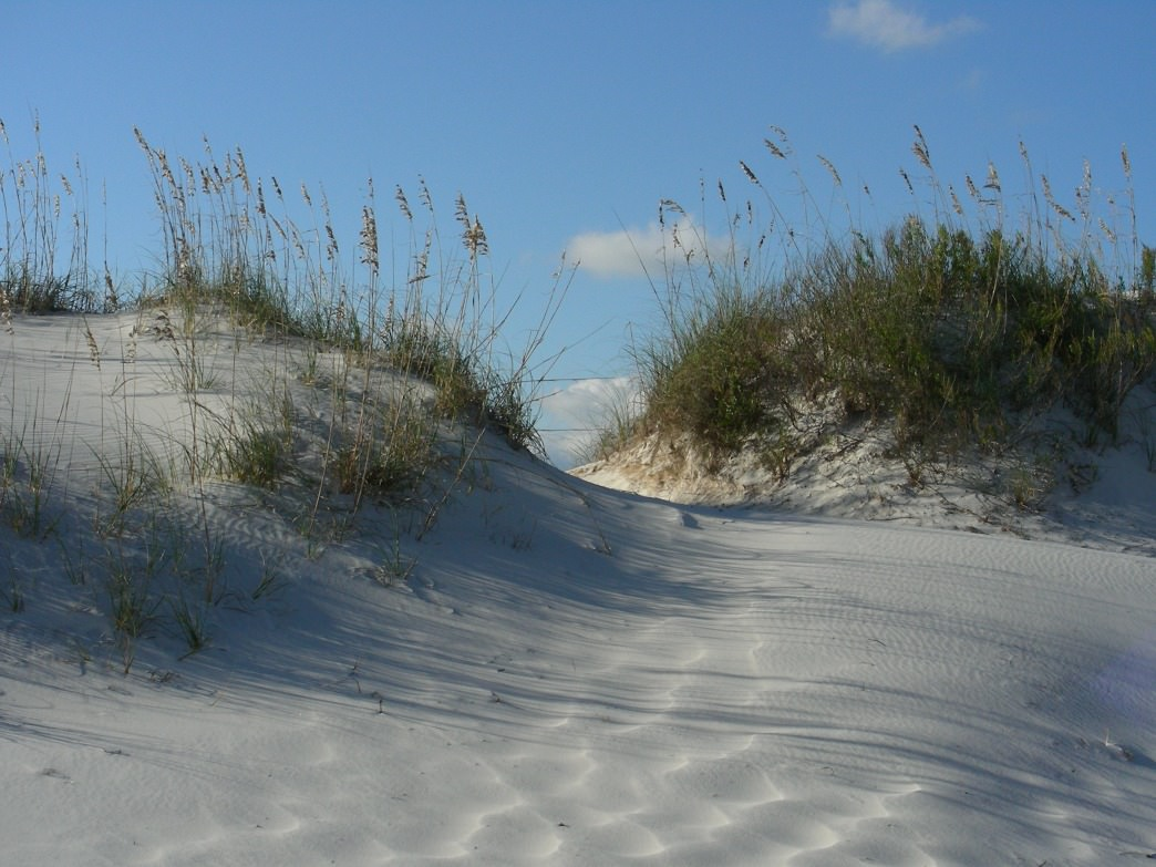 The last sand dune to cross through on the Pine Beach Trail before arriving at the Gulf of Mexico.