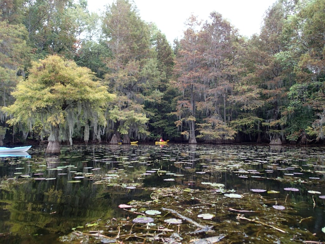 Paddle through the lily pads at Santee State Park.