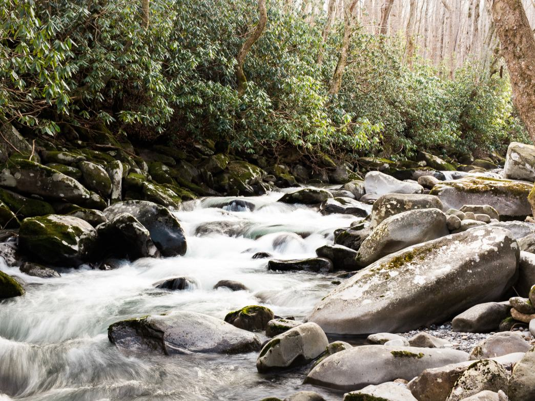The lively waters of Porters Creek follow hikers all the way down the trail.