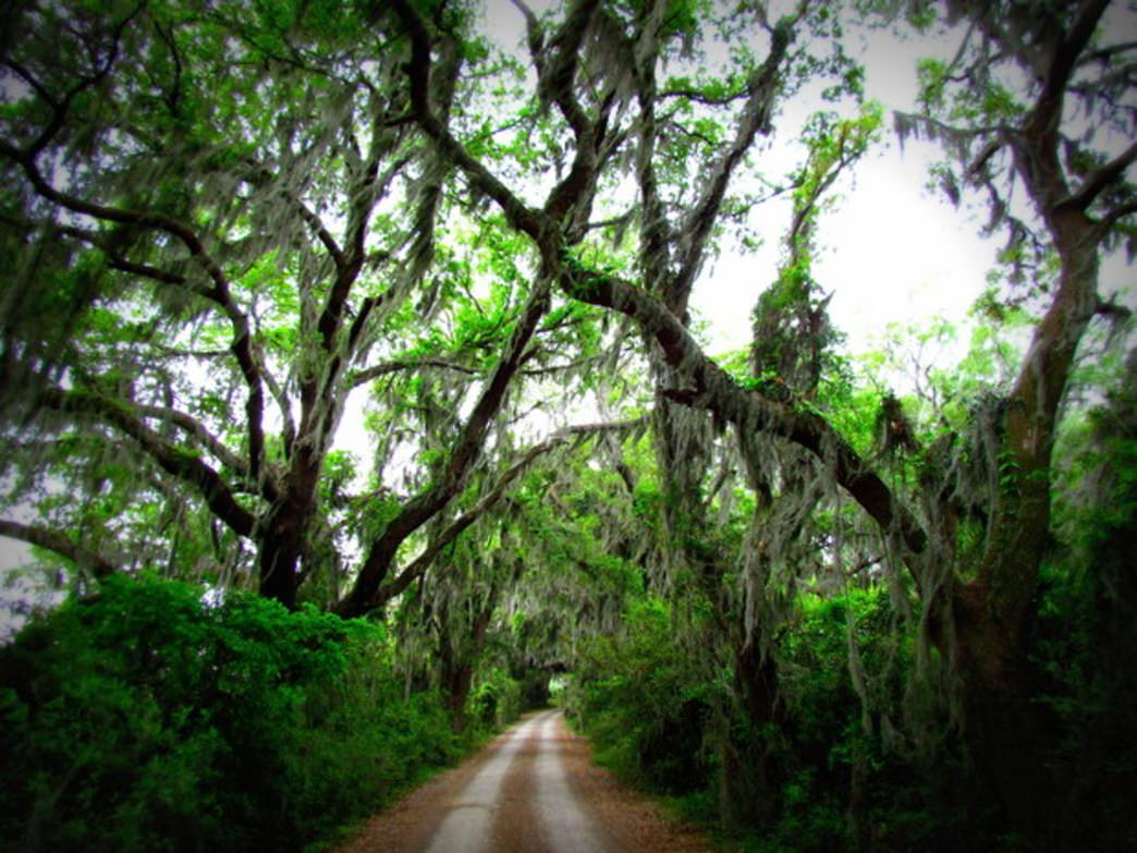The Laurel Hill Drive at Savannah NWR