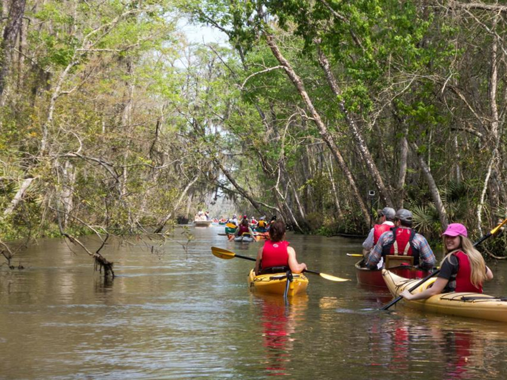 Paddling through the cypress groves on the Altamaha River.