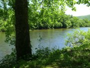 View of the Greenbrier River from the trail.