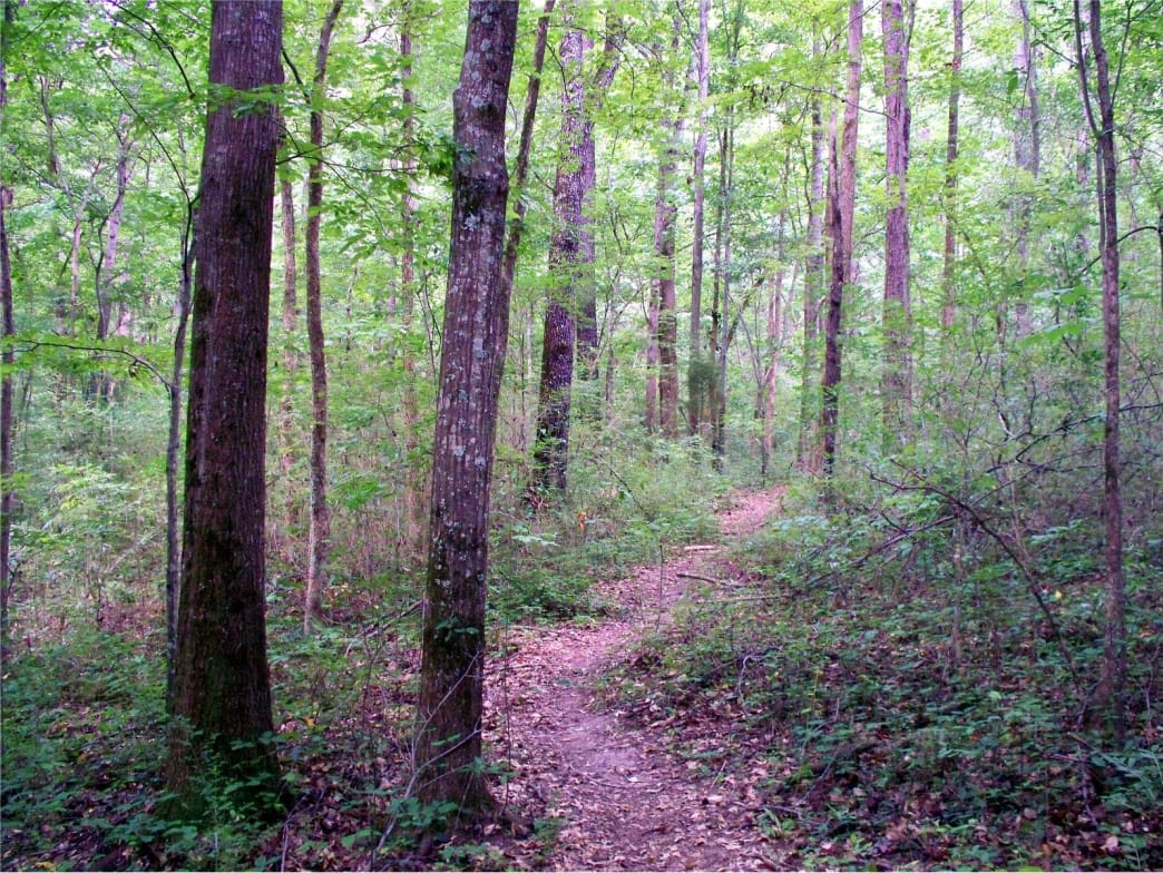 Ruffner Mountain offers excellent singletrack for trail runners.