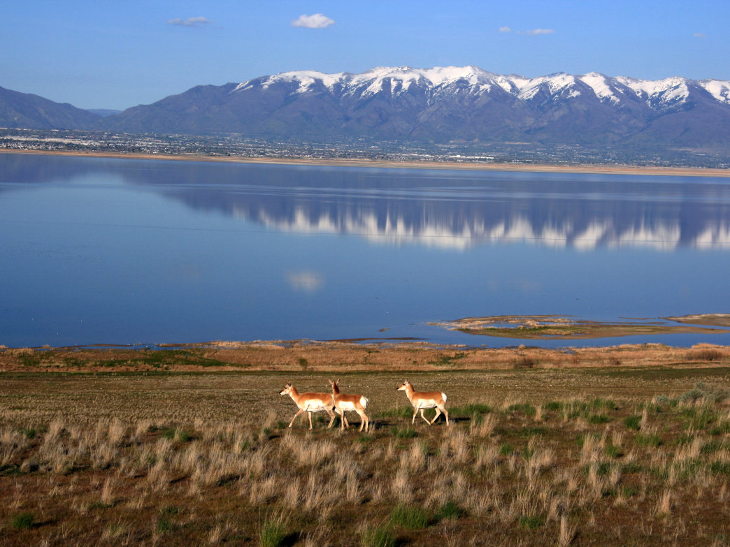 Antelope Island State Park is a unique natural area.