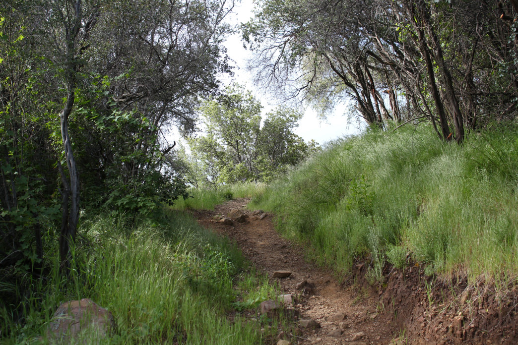 Take the Cold Spring Trail to a 360-degree view at the summit of Montecito Peak.