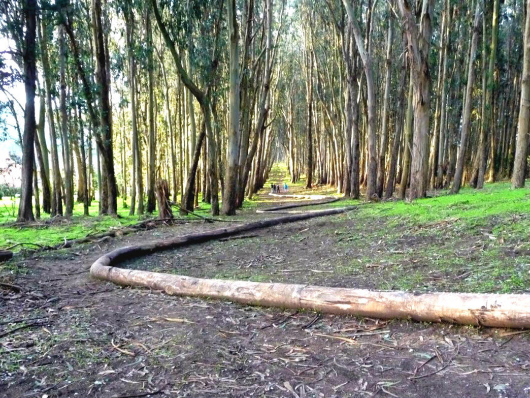 The Presidio boasts 24 miles of trails.