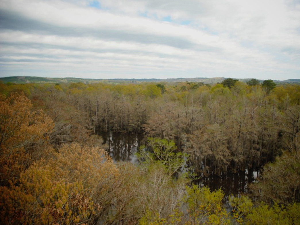 View from Perry lakes Fire Tower