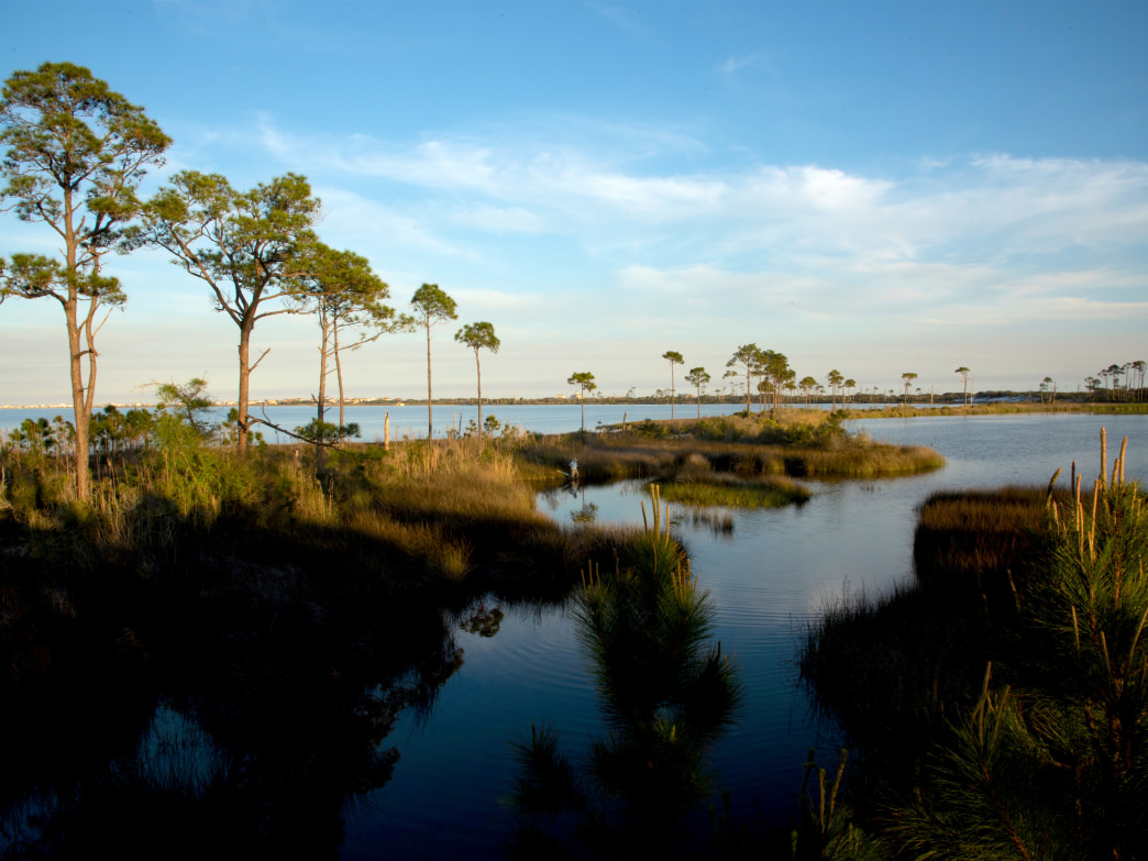 The refuge is full of marshes, marine wetlands, and endangered wildlife.