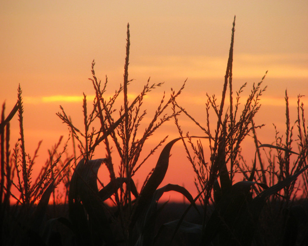 In Alabama you'll find great corn mazes from Sand Mountain to the Gulf Coast.