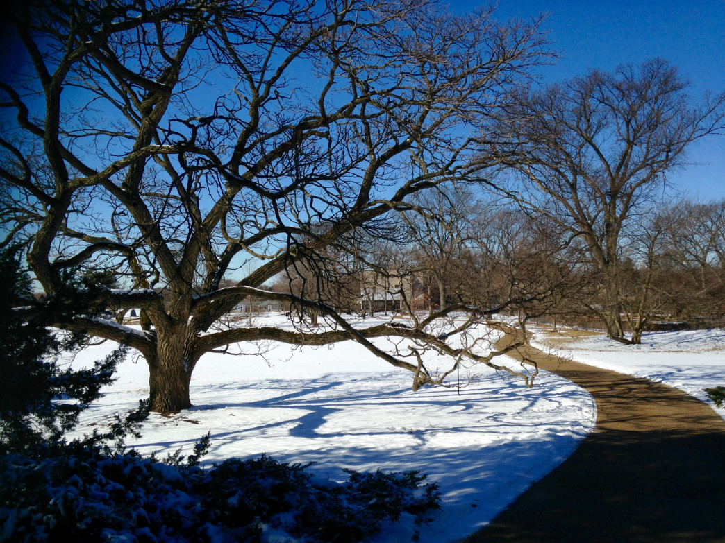The Morton Arboretum offers both paved trails and off-road paths to explore.