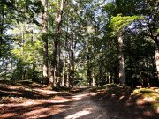 20170710_Old Stone Fort State Archaeological Park_Hiking10