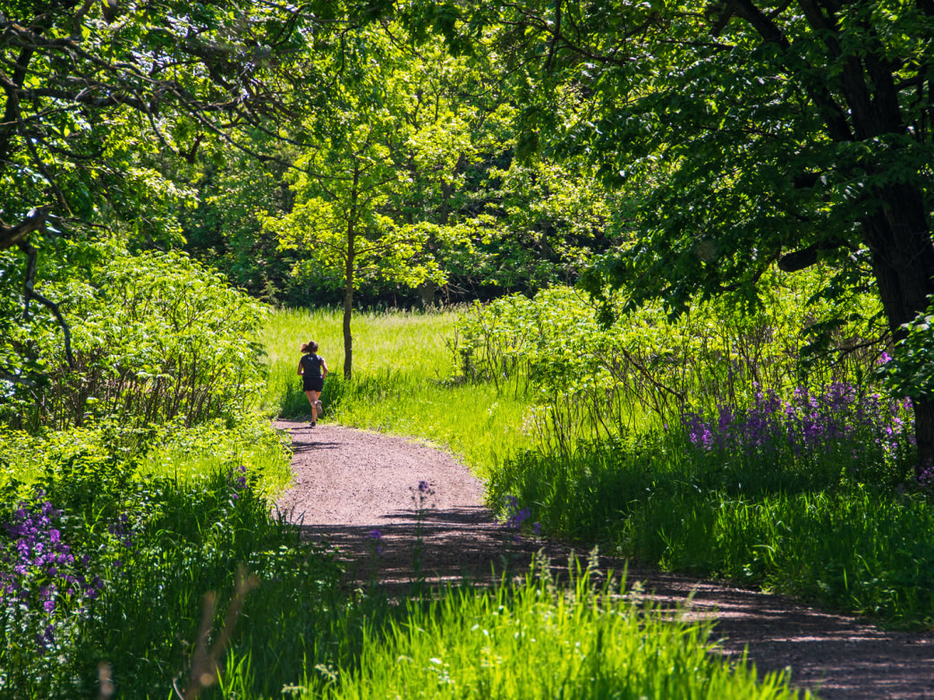 A runner ascends the gentle but long slope of the Grand Ravine Trail.