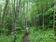 Image for Cataloochee Campground