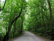 20170620_Tennessee_Chattanooga_Pot House Trail_Hiking9