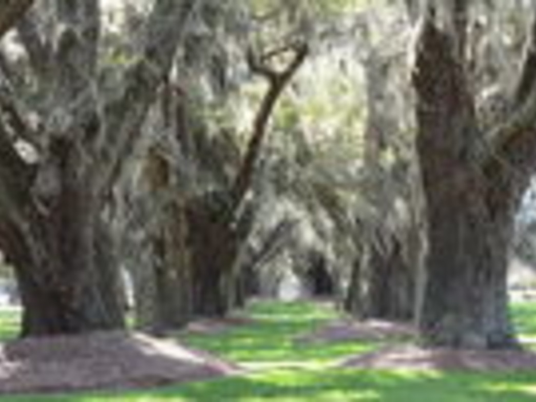 Little St. Simon Island's Avenue of the Oaks.