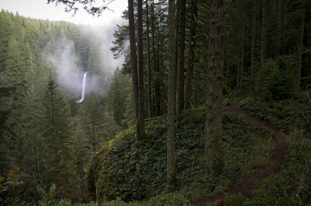Silver Falls State Park in Winter: 3 Reasons Why You ...