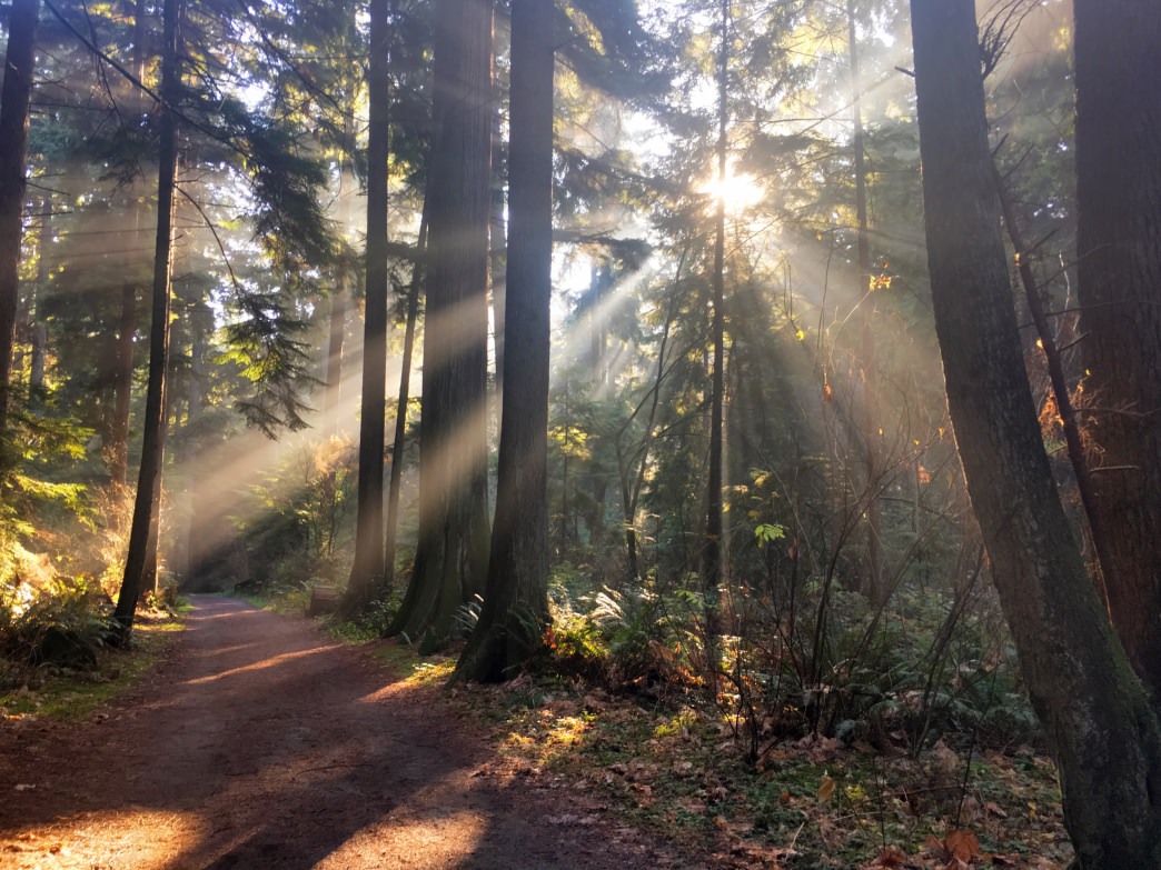Vancouver's Stanley Park is a natural oasis in the middle of the city.