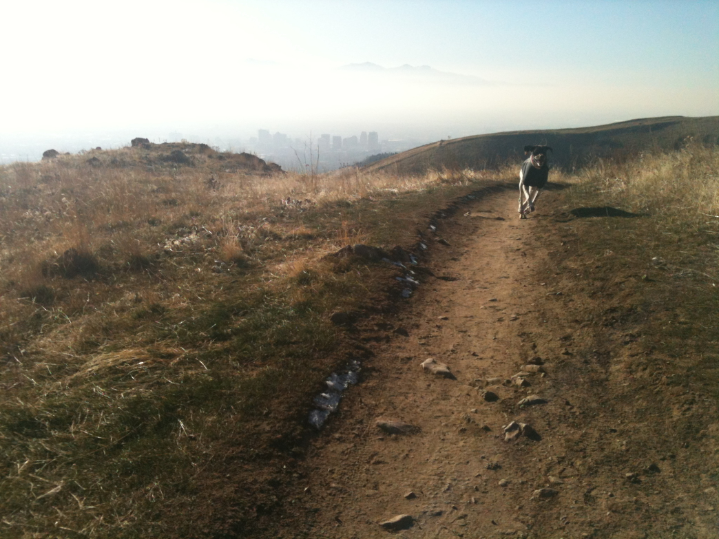 Dog Friendly Hikes Salt Lake City