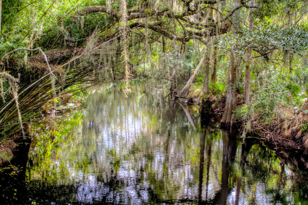 A paddling trip on Shingle Creek features plenty of tree cover for a shady ride.