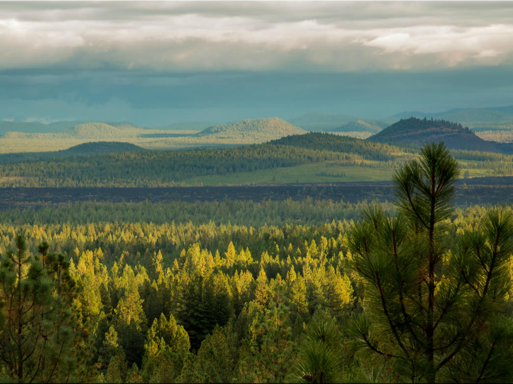 A sweeping stretch of evergreens and cinder cones near Bend, OR.