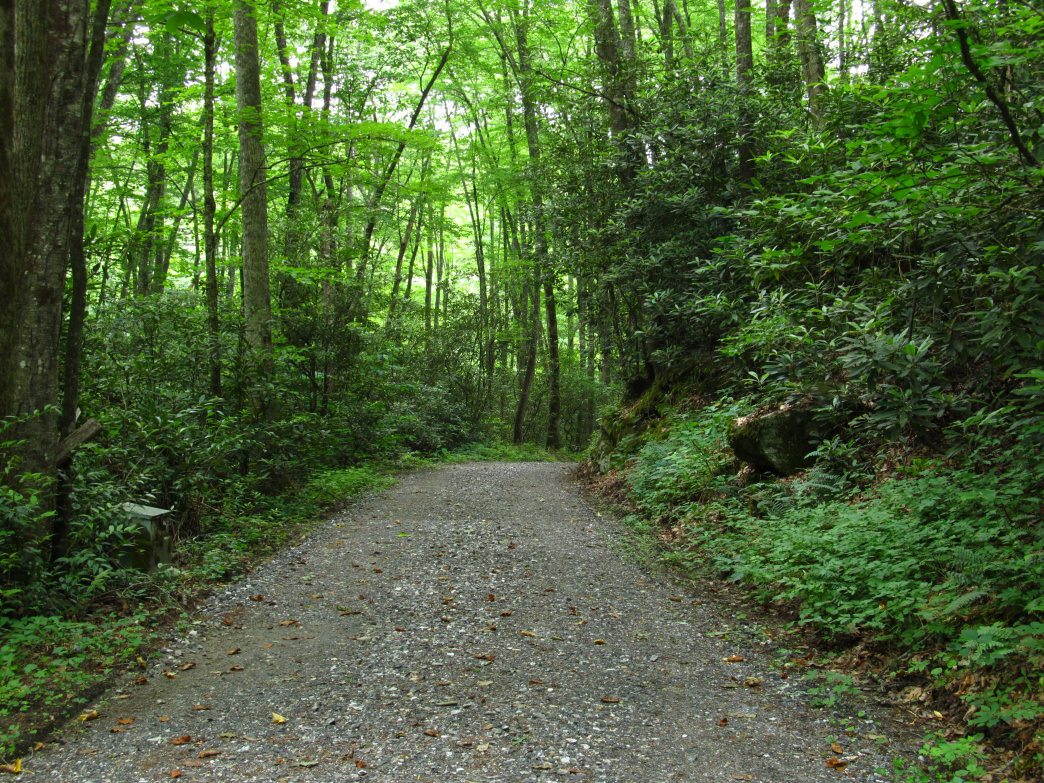 The Mingus Mill Trail offers hikers access to the summit of the 5,160-foot Newton Bald.