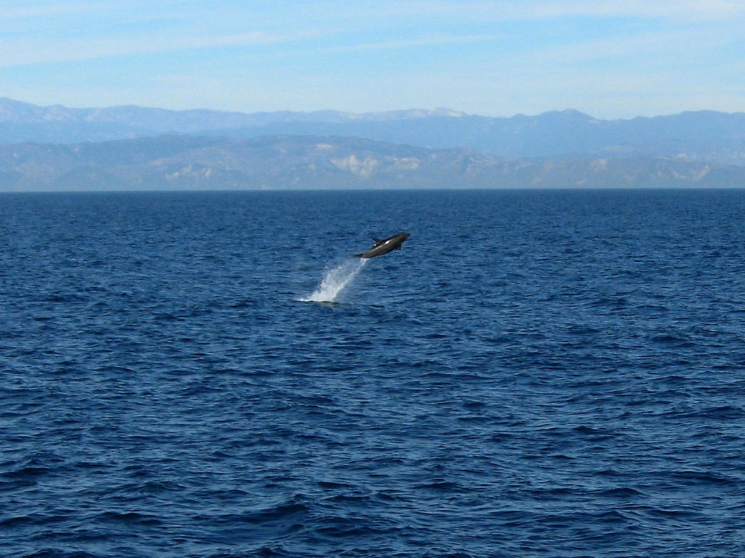 A dolphin plays in the water off Santa Cruz Island. Create new entry and link Add some existing entries.