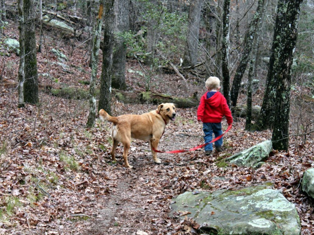 Kids and dogs are welcome in DeSoto State Park Trails
