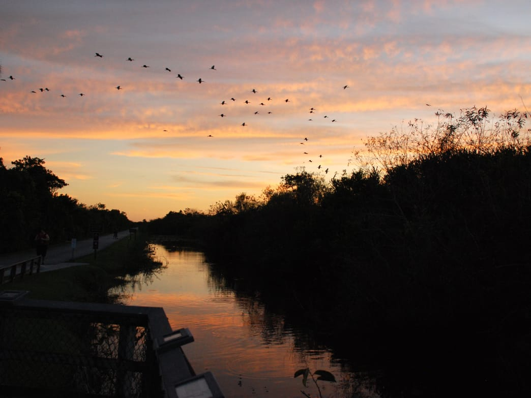 The Everglades encompasses some of the most untamed landscapes in the country.