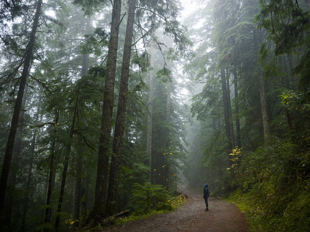 Hikes during the rainy season in Portland come with a unique serenity.