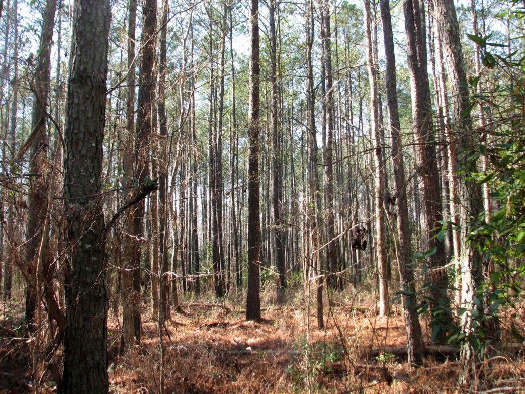 Explore the coastal ecosystems at Goose Creek State Park.