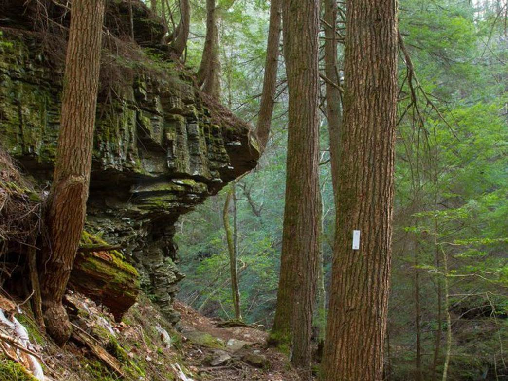 Consistently ranked among the top 25 hikes in the country, the Fiery Gizzard Trail is seriously spectacular