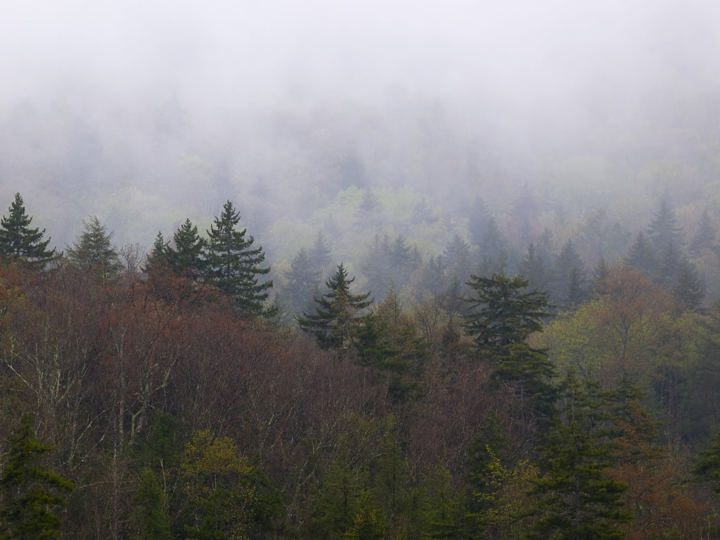 Fog lifts over the Cranberry Glades.