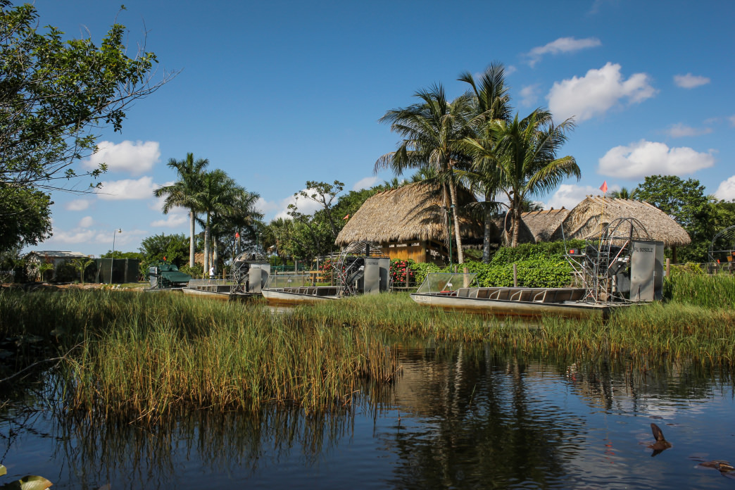 The Everglades offer a rich diversity of plant and animal life.