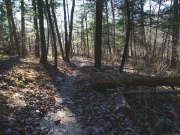 Mountwood Trail