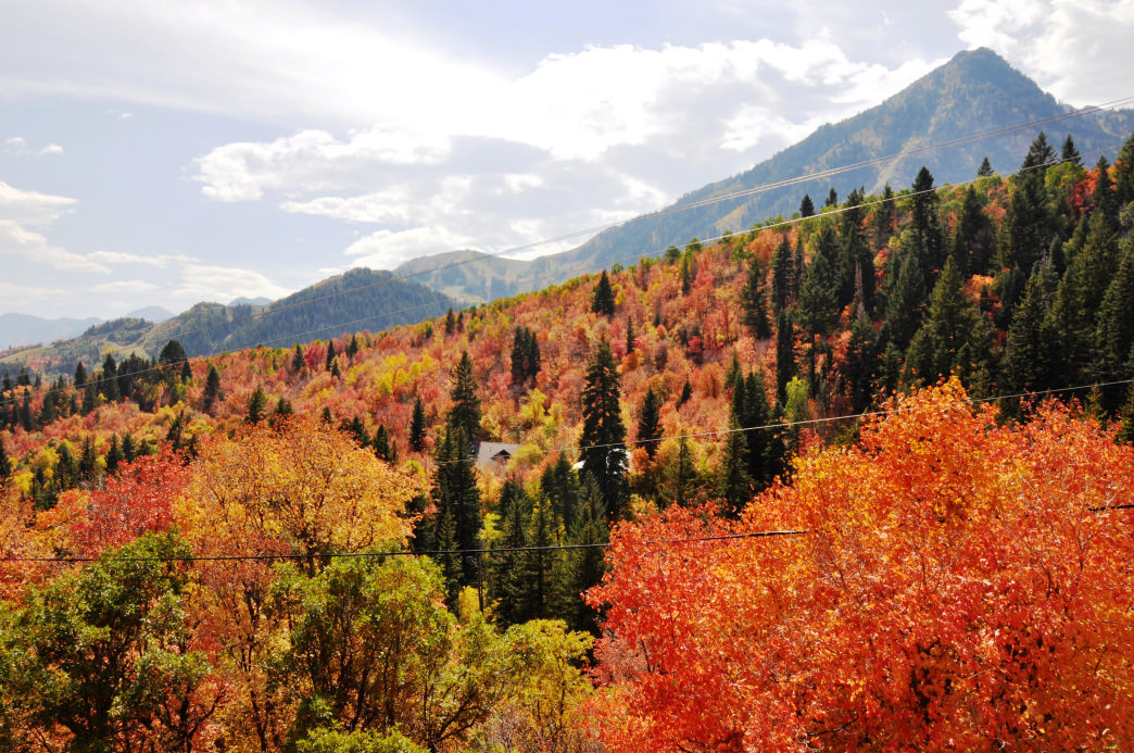 A drive through the Alpine Scenic Loop features some of the best views in the region.