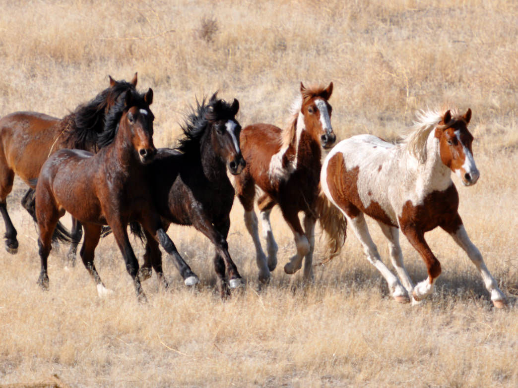 Observe the wild horses that graze along the edges of the Onaqui Mountains and Cedar Mountains.