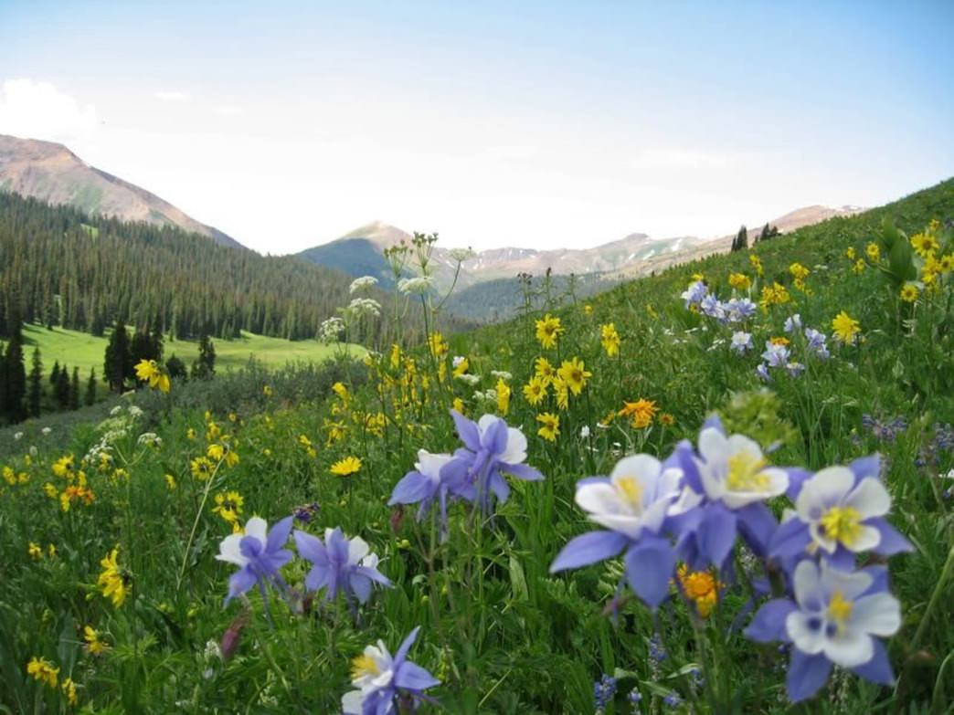 Colorado's wildflower season in high country combines two excellent experiences: hiking and colorful mountainsides.