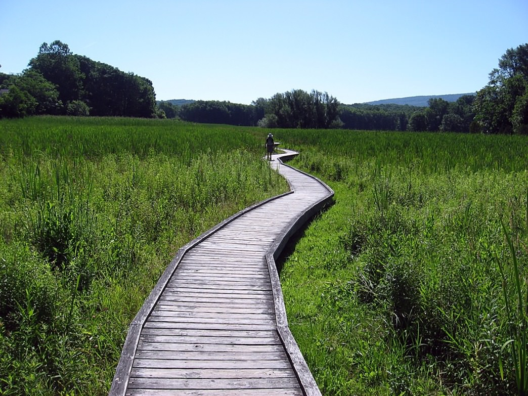 A beautiful way to explore nature is from atop the boardwalks at Macri Trail Wells Mills.